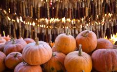 A pile of pumpkins in front of a wall of dried Indian corn